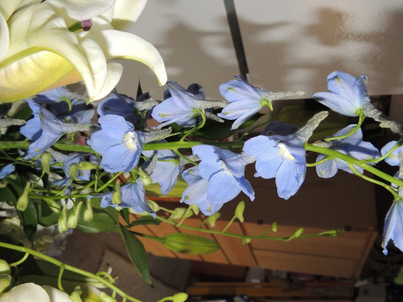 Yellow Roses & Blue Bonnets