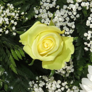 Yellow Rose Boutonnier